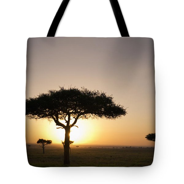 Trees On The Savannah With The Sun Tote Bag by David DuChemin