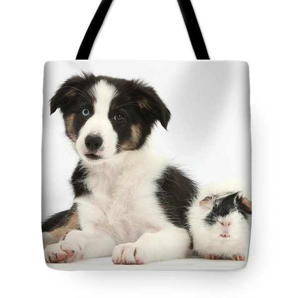Tricolor Border Collie Pup And Guinea Tote Bag by Mark Taylor