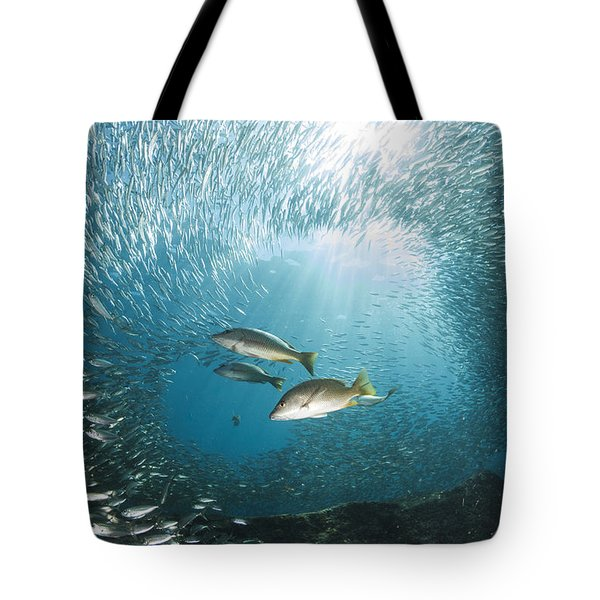 Trio Of Snappers Hunting For Bait Fish Tote Bag by Todd Winner