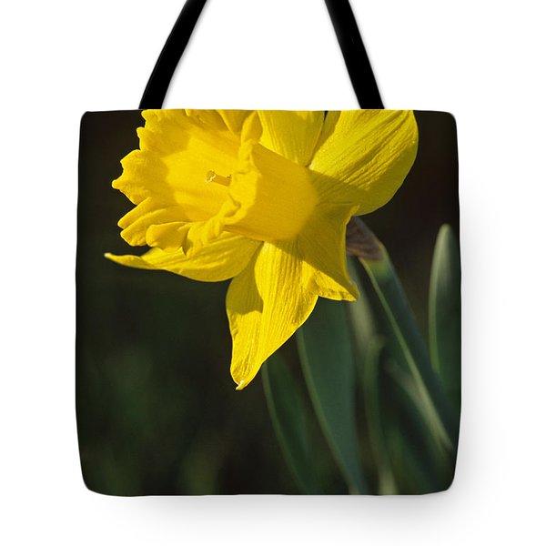 Trumpeting Daffodil Tote Bag