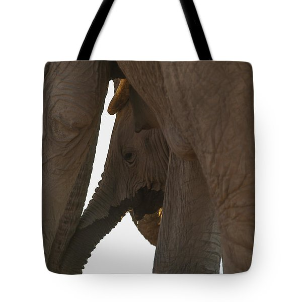 Trunk Touch Tote Bag