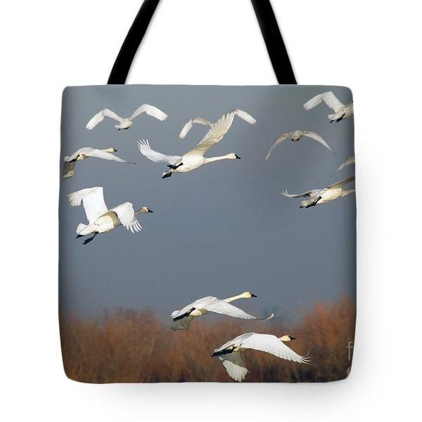 Tundra Swan Takeoff Tote Bag