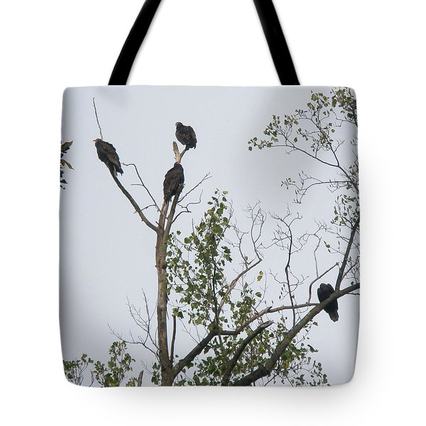 Turkey Vulture - Cathartes Aura Tote Bag by Mother Nature