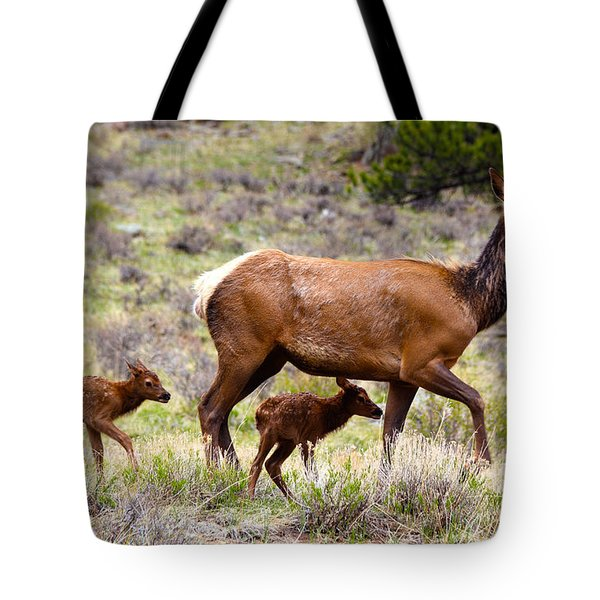Twin Elk Calves Tote Bag