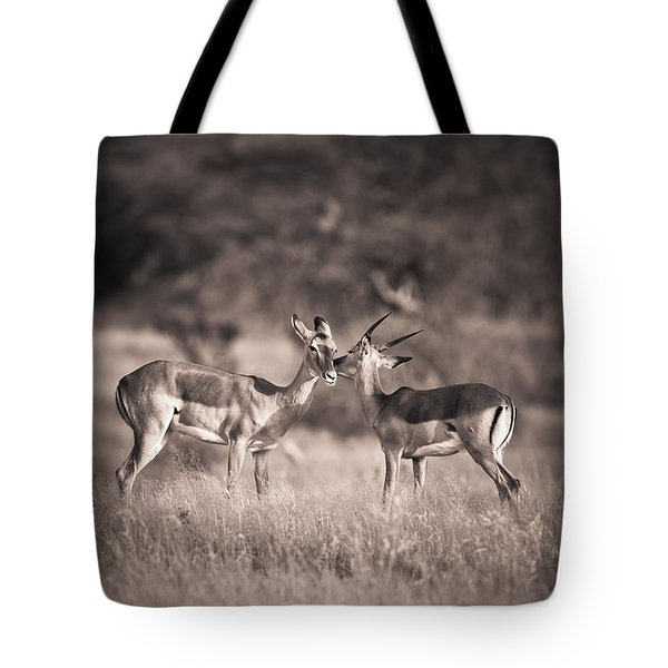 Two Antelopes Together In A Field Tote Bag by David DuChemin