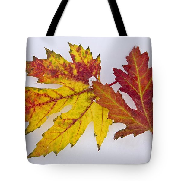 Two Autumn Maple Leaves  Tote Bag by James BO  Insogna
