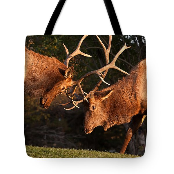 Two Bull Elk Sparring 91 Tote Bag by James BO  Insogna