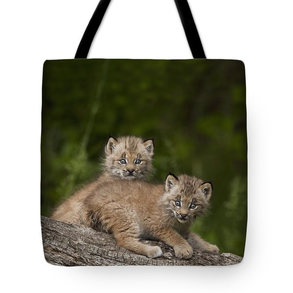 Two Canada Lynx Lynx Canadensis Kittens Tote Bag by Richard Wear