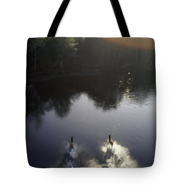 Two Roosevelt Elks Ford A Stream Tote Bag