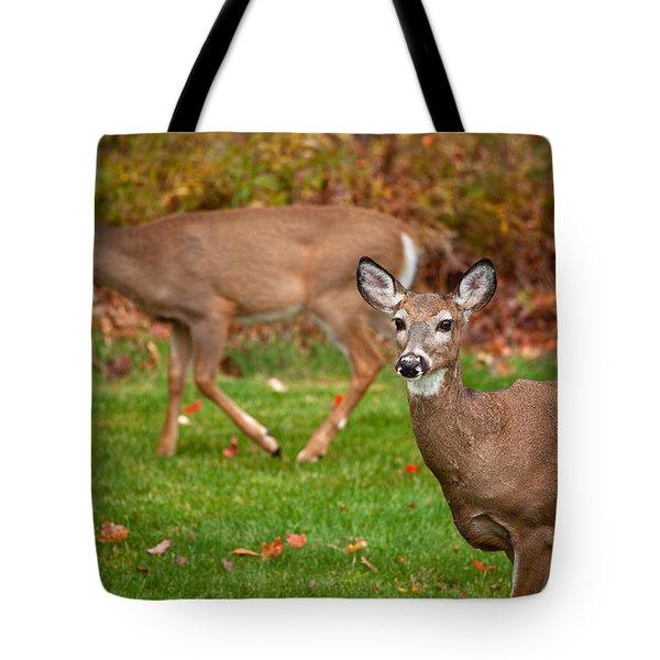 Two Visitors Tote Bag by Karol Livote