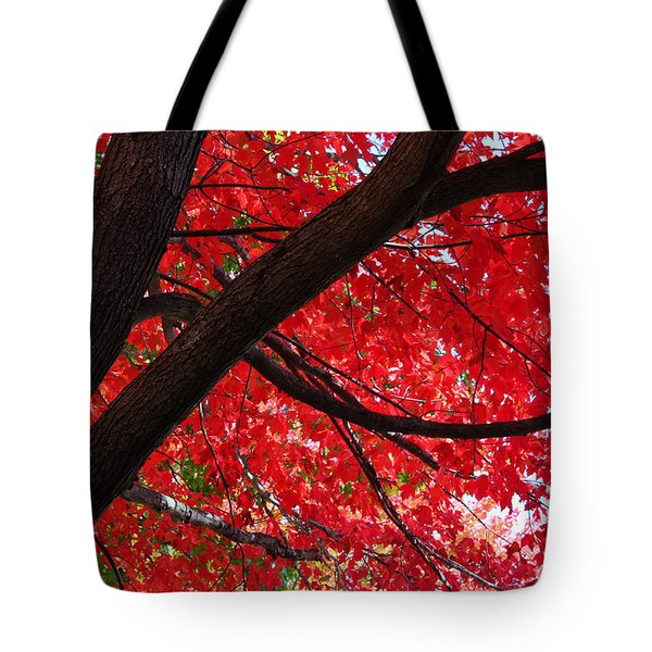 Under The Reds Tote Bag by Rachel Cohen