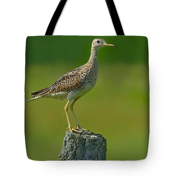 Upland Sandpiper Tote Bag