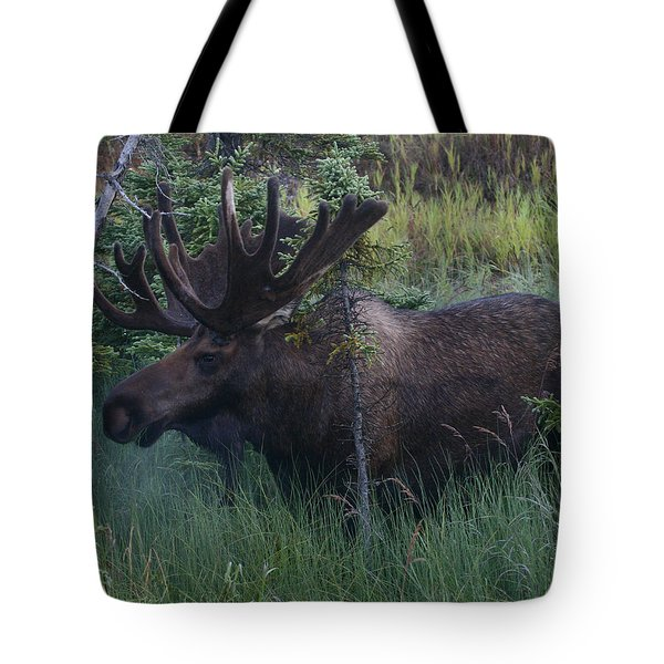 Tote Bag featuring the photograph Velvet by Doug Lloyd