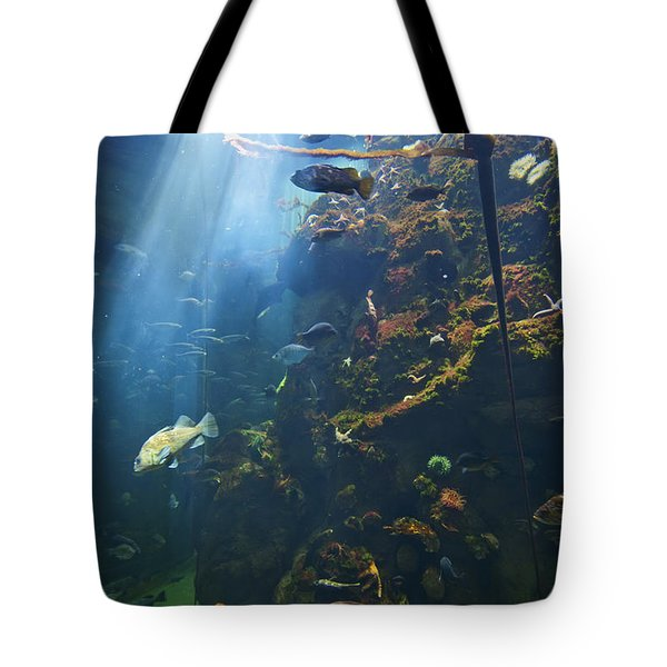 View Of Fish In An Aquarium In The San Tote Bag by Laura Ciapponi