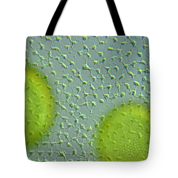 Volvox Globator Surface View Of Colony Tote Bag by M I Walker