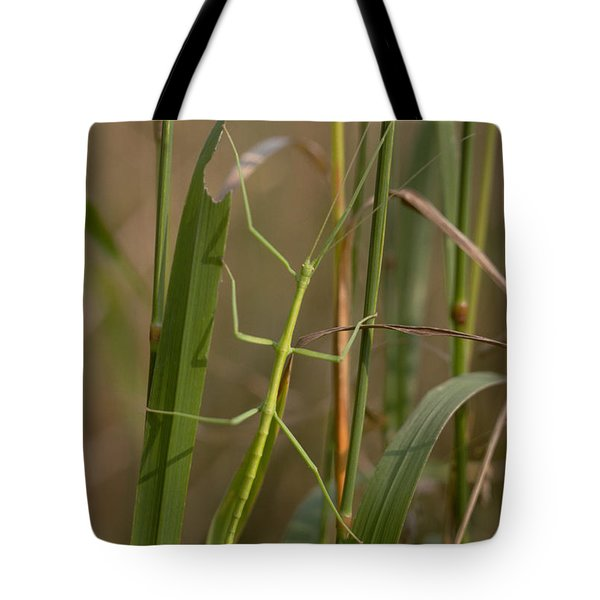 Walking Stick Insect Tote Bag by Ted Kinsman