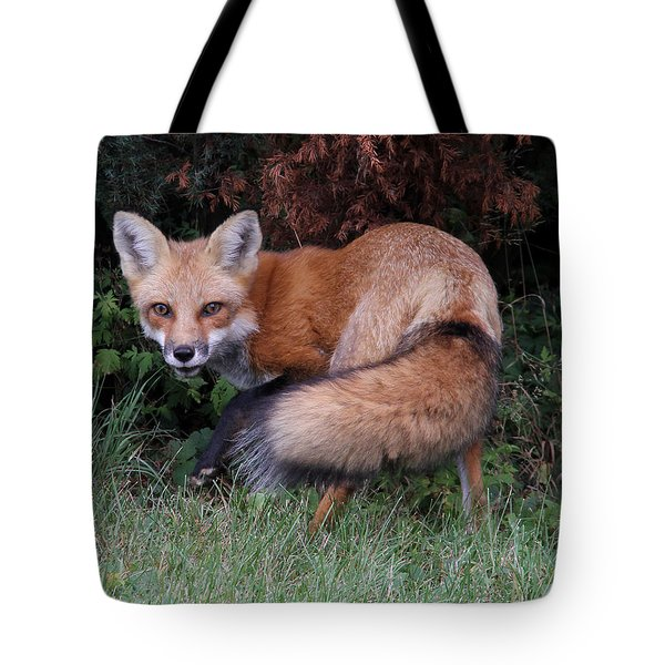 Wary Fox Tote Bag by Doris Potter