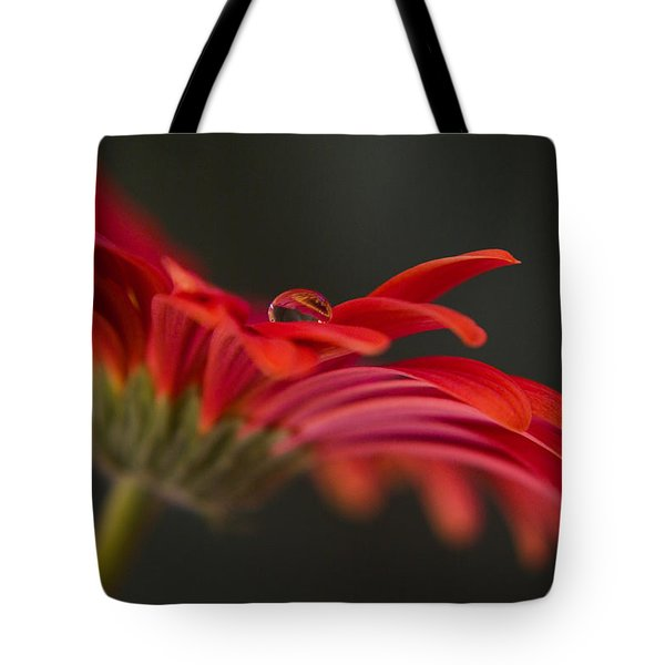 Water Drop On A Red Gerbera Flower Tote Bag by Pixie Copley