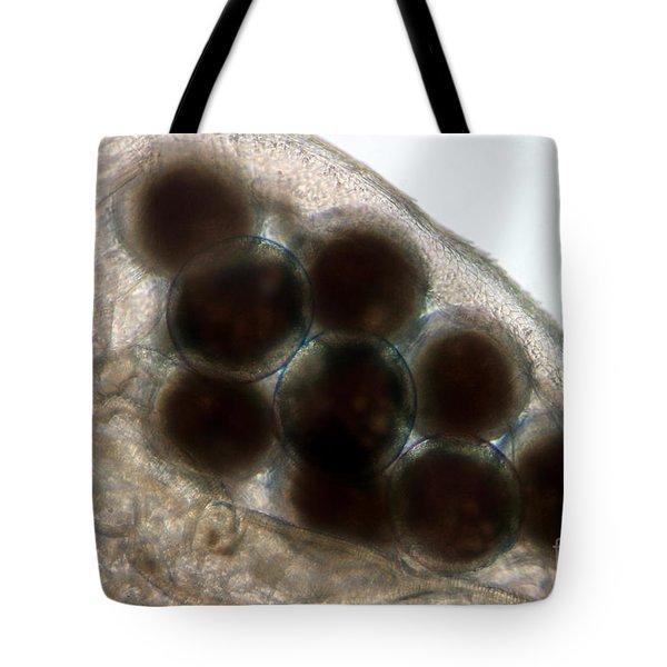 Water Flea Daphnia Magna Eggs Tote Bag by Ted Kinsman