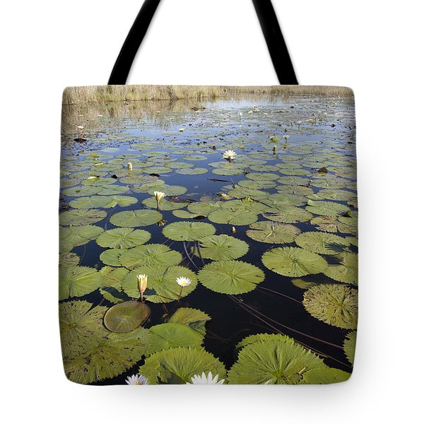 Water Lily Nymphaea Sp Flowering Tote Bag by Matthias Breiter