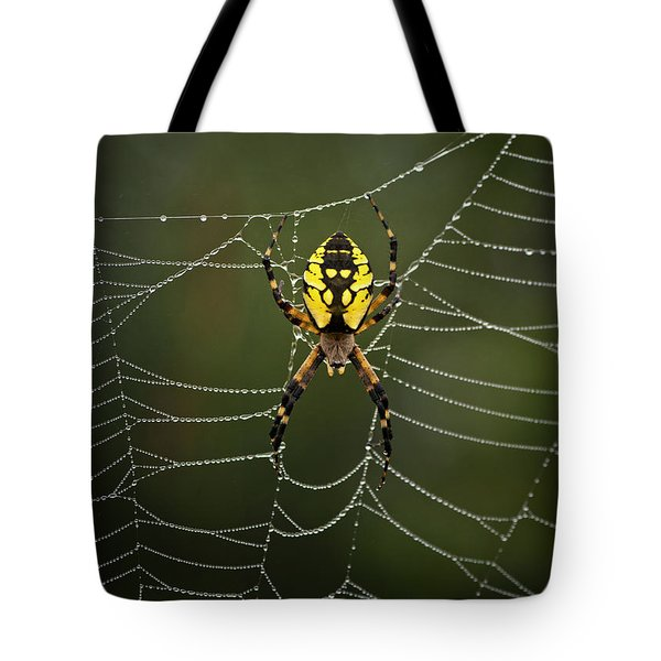 Weave Master Tote Bag by Susan Capuano