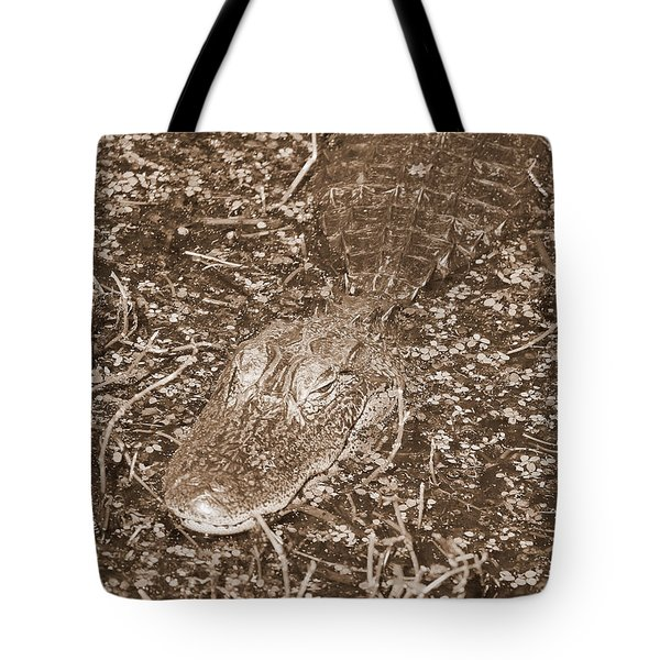 Welcome To The Swamp - Sepia Tote Bag by Carol Groenen