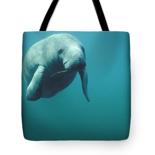 West Indian Manatee Trichechus Manatus Tote Bag by Tui De Roy