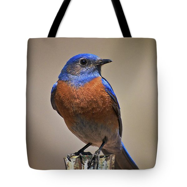 Tote Bag featuring the photograph Western Bluebird by Britt Runyon