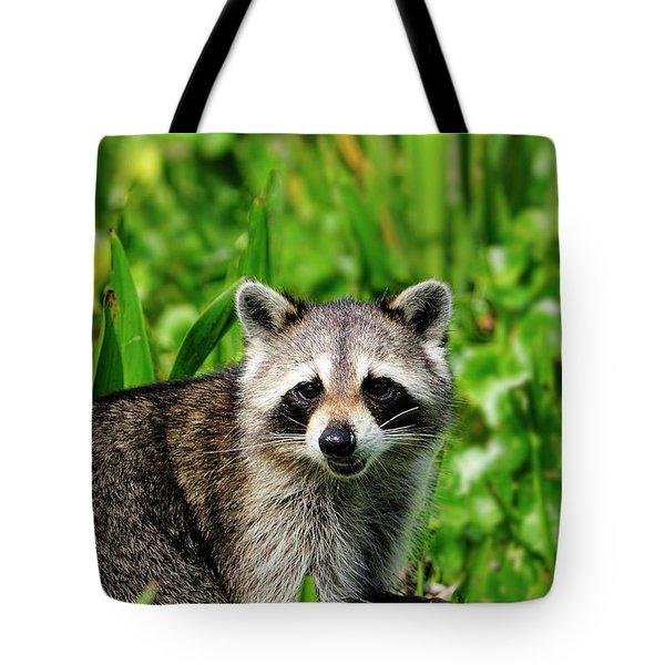 Wetlands Racoon Bandit Tote Bag