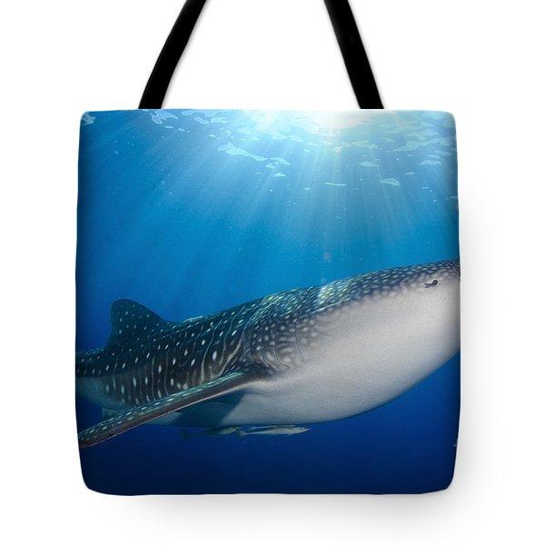 Whale Shark Feeding Under Fishing Tote Bag by Steve Jones