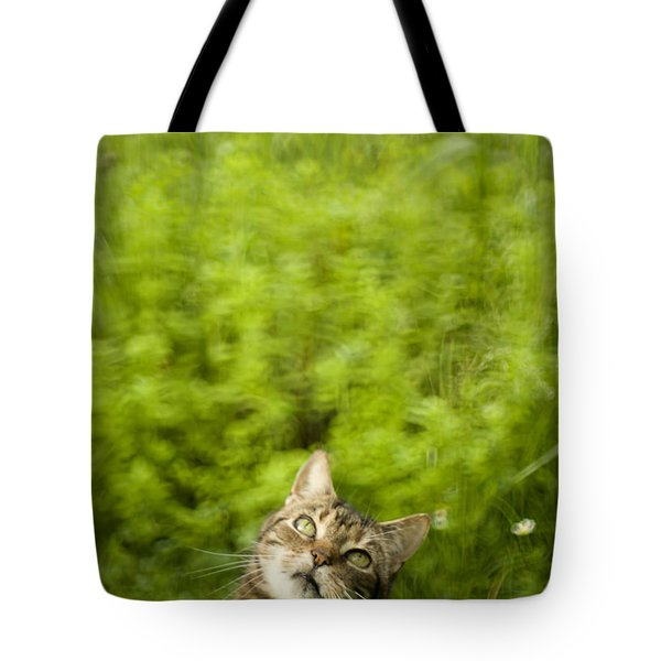 What Is Up There Tote Bag by Angel  Tarantella