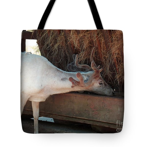 What's For Lunch Tote Bag by Methune Hively