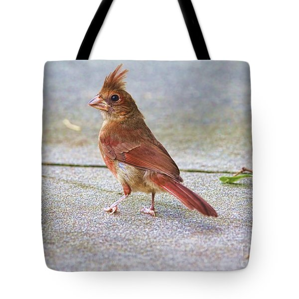 Where Is The Seed Guy Tote Bag