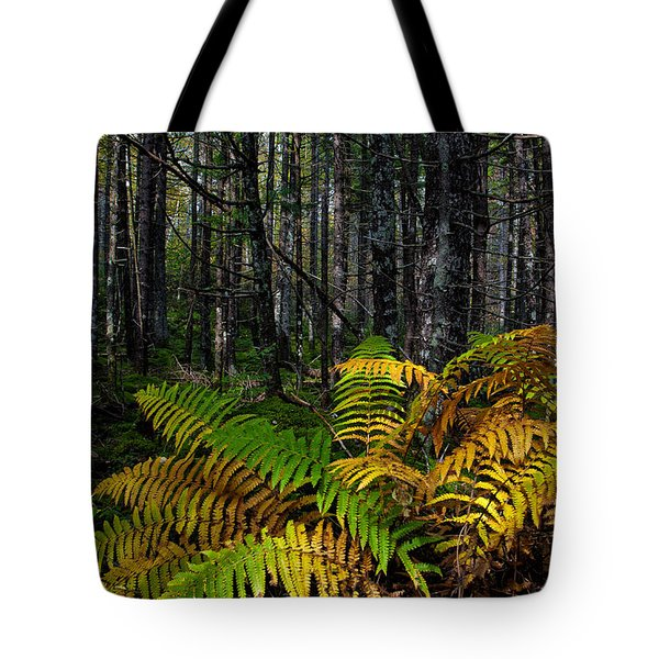 Where The Ferns Grow Tote Bag