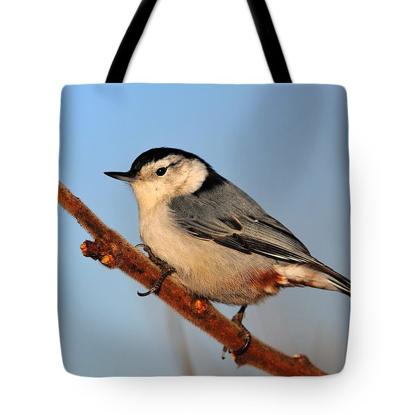 White-breasted Nuthatch Tote Bag by Tony Beck
