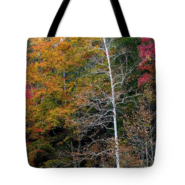 White Tree Fall Colors  Tote Bag by Rich Franco