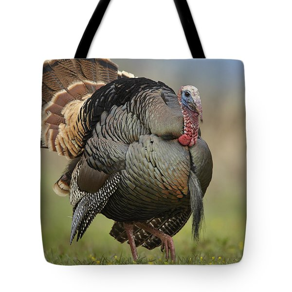Wild Turkey Male In Courtship Display Tote Bag by Tim Fitzharris