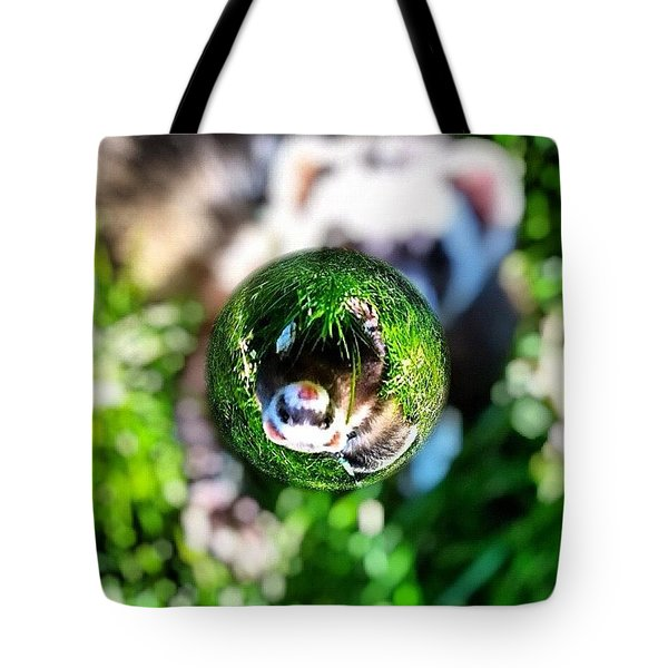Winnie - A Ferret In A Marble Tote Bag