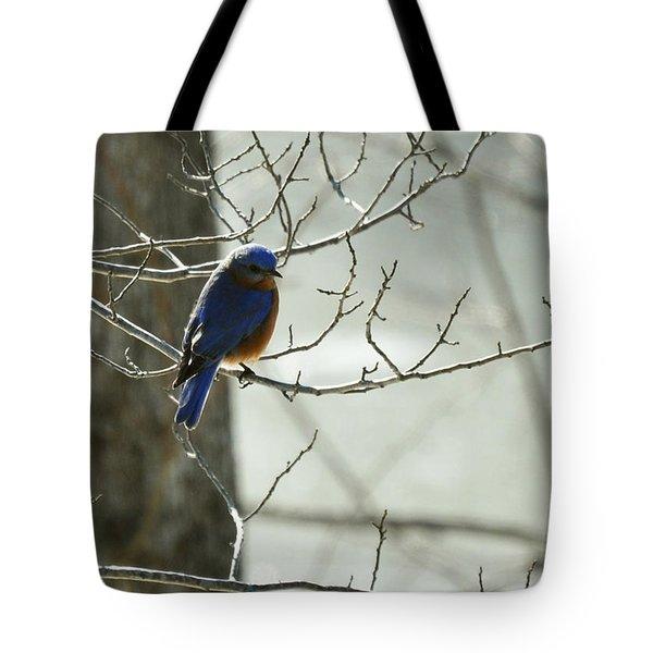 Winter Bluebird Tote Bag by Rebecca Sherman