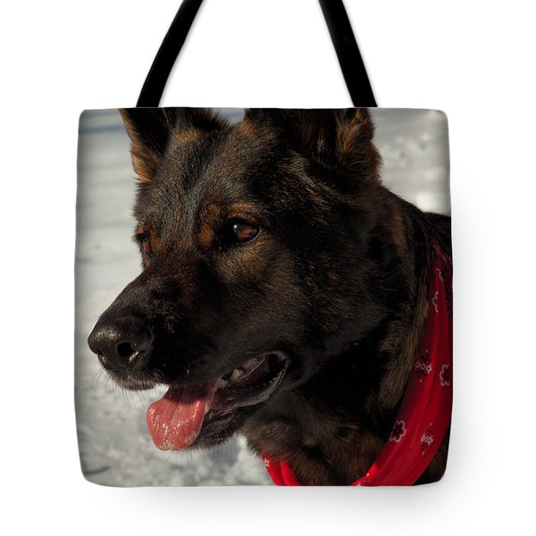 Winter Dog Tote Bag by Karol Livote