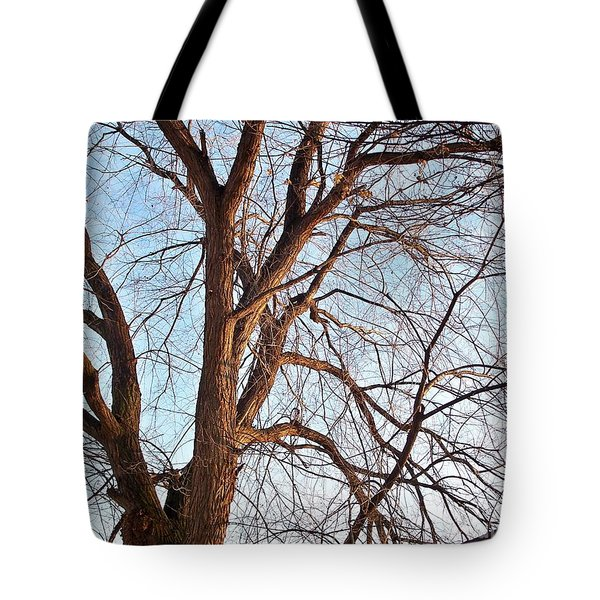 Tote Bag featuring the photograph Winter Sunlight On Tree  by Chalet Roome-Rigdon