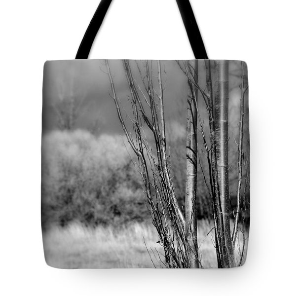 Tote Bag featuring the photograph Winters Branch by Kathleen Grace