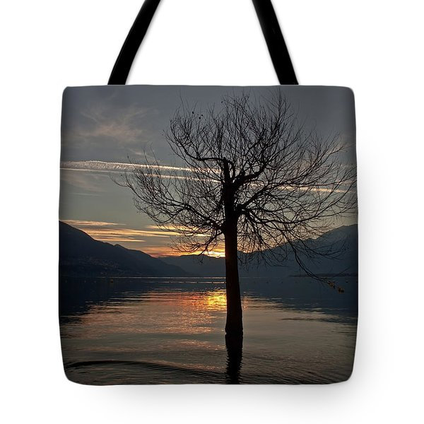 Wintertree In The Evening Tote Bag by Joana Kruse