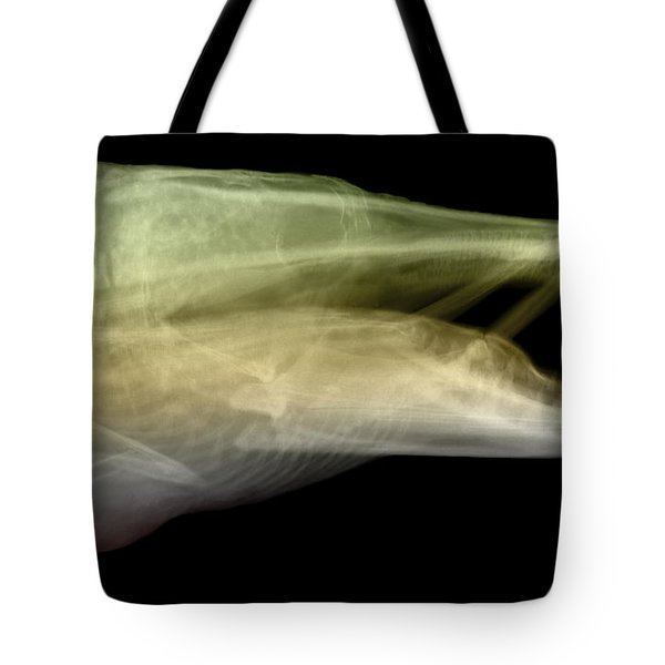 X-ray Of Muskie Tote Bag by Ted Kinsman