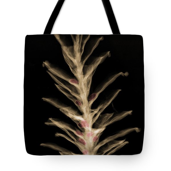 X-ray Of Pinecone With Seeds Tote Bag by Ted Kinsman