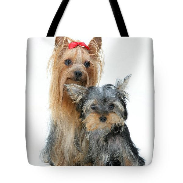 Yorkshire Terriers Tote Bag by Jane Burton