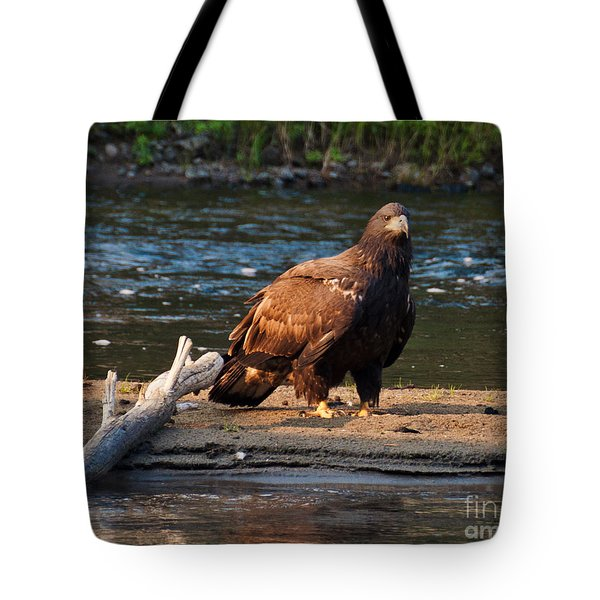 Tote Bag featuring the photograph Young And Wise by Cheryl Baxter