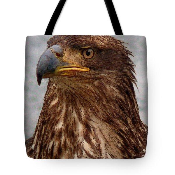 Young Bald Eagle Portrait Tote Bag