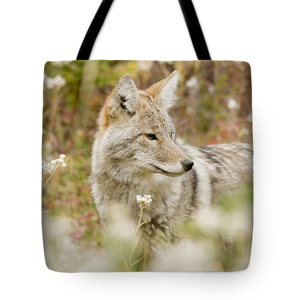 Young Coyote Canis Latrans In A Forest Tote Bag by Philippe Widling