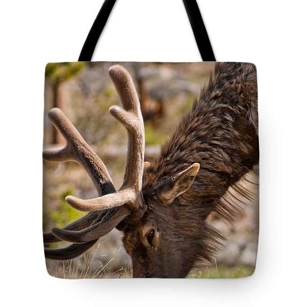 Young One Tote Bag by Colleen Coccia